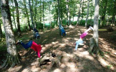Pouk v gozdu – 1. razred
